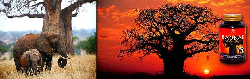 Baobab Premium v prahu znamke Natural Earth